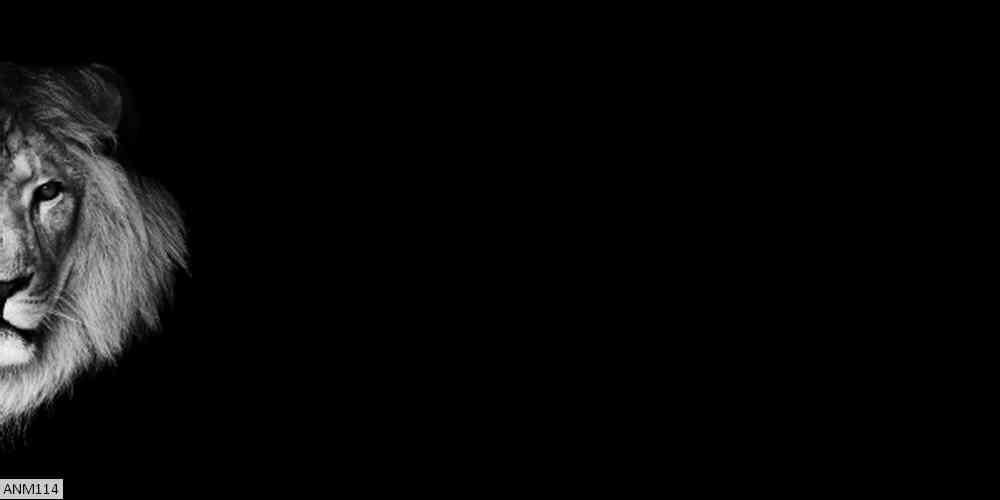 ANM114