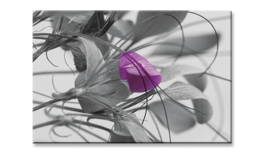 הדפסה על קנבס מיקי יפרח